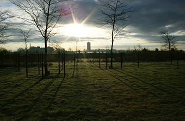 boerderij-foto---05-zicht-watertoren-vanuit-tuin